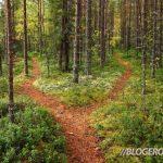 Секреты опытных туристов: как ориентироваться в лесу