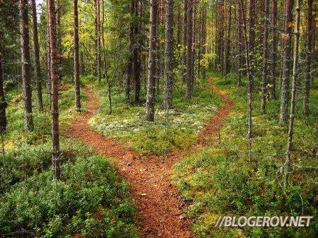 Развилка в лесу